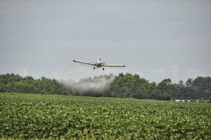 Spraying of the crops