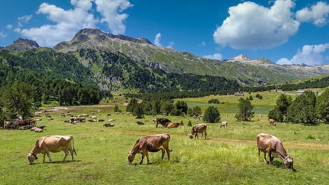 Happy cows in a meadow