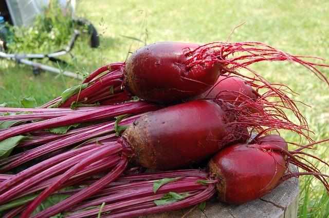 Beet root harvest