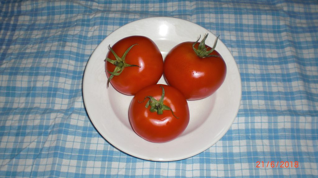 lovely ripe tomatoes