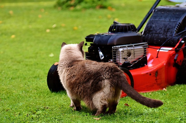 Cat and Lawn-mower