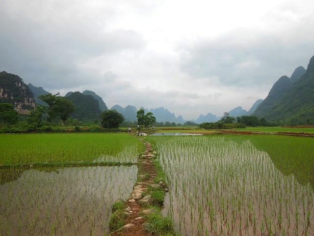 Rice fields of Yunnan
