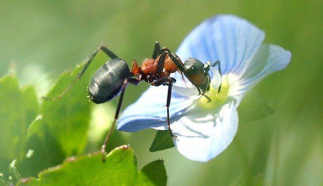 Closeup of ant