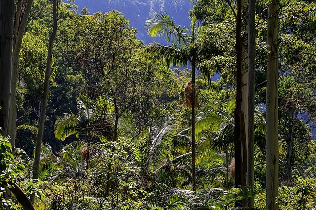 Rain-Forest Queensland