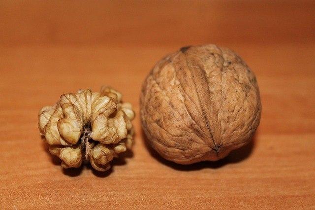 A walnut resembles the brain